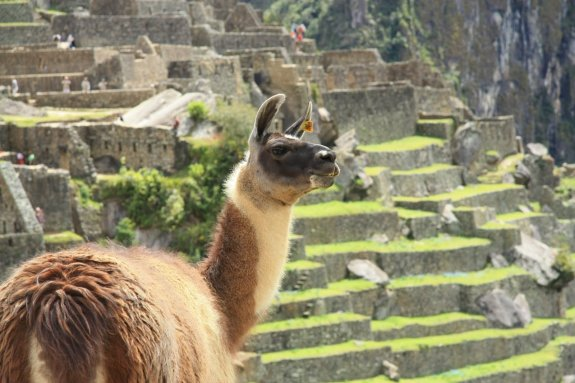 MP wildlife huayna picchu