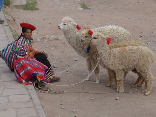 Children Herding Llamas Peru Ponchos
