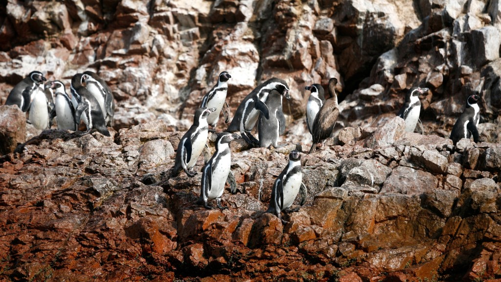 islas ballestas - things to do in peru