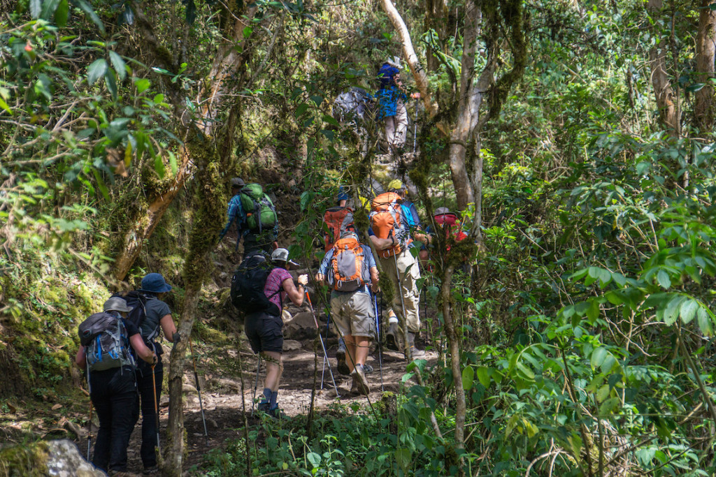 Inca Trail Hikers Cloud Forest